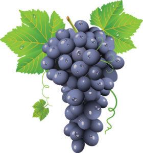 nj-wine-tour-grapes